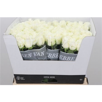 Bouquet white Roses big heads