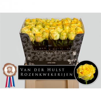 Bouquet yellow Roses big heads