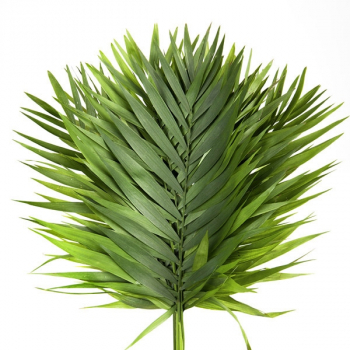 10 Chico leaves
