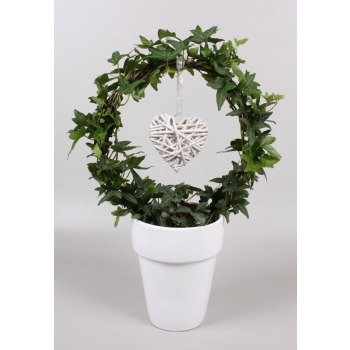 Hedera bow in a ceramic white pot with heart