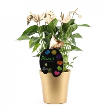 Anthurium painted Picasso gold and silver in a ceramic pot