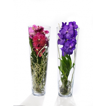 Vanda Orchid in an elongated glass vase