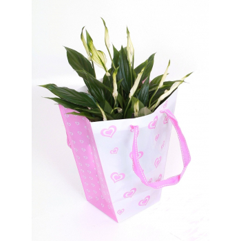 Spathiphyllum in a lovely pink bag