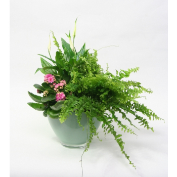 Plant arrangement in a pastel green glass coupe