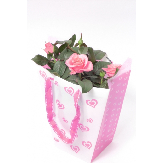 Pot Rose in a heart bag with a pink linnen