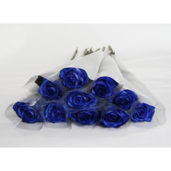 Blue Roses individual packed in a sleeve