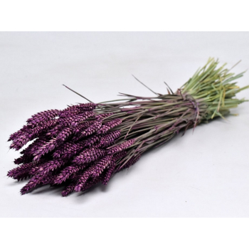 Dry Wheat Bunch with a purple color treatment