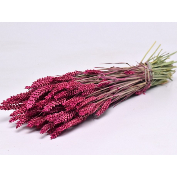 Dry Wheat Bunch with a dark pink color treatment
