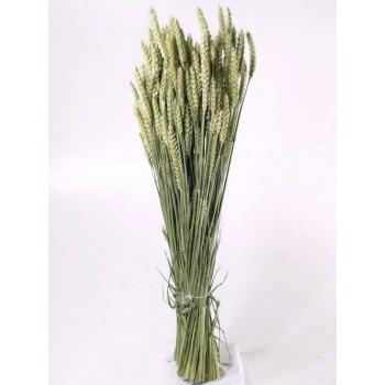 Dry Wheat Bunch