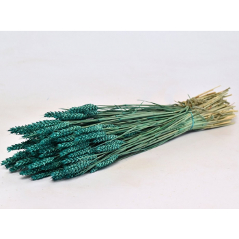 Dry Wheat Bunch with a petrol green color treatment