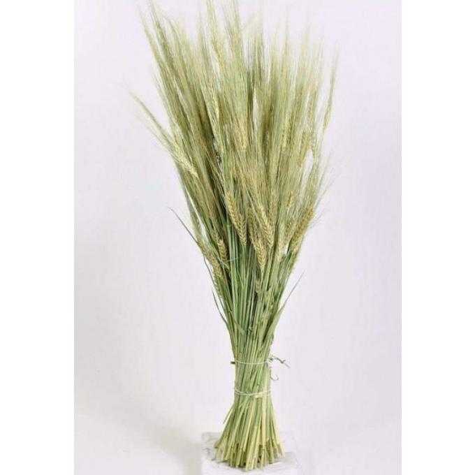 Dried Barley natural