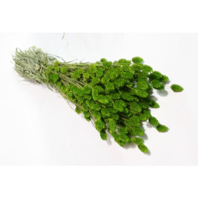 Dried Phalaris green