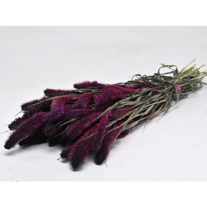 Foxtail dried (125 gr) purple