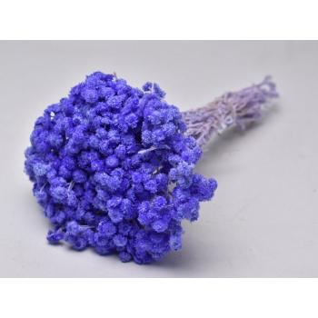 Dried Helichrysum immortelle lavender