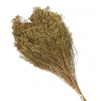 Broom bloom yellow dried (100 gr)
