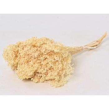 Broom bloom dried (150 gr) bleached
