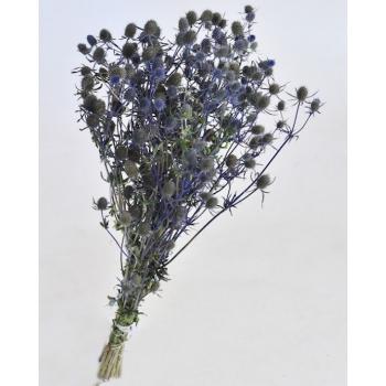 Eryngium blue dried