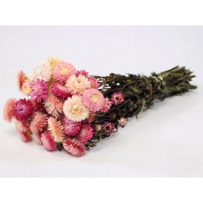Dried Helichrysum light pink (185 gr)