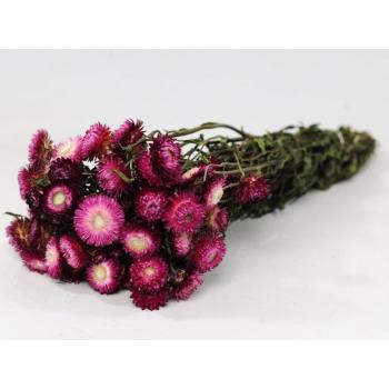 Dried Helichrysum dark pink (185 gr)