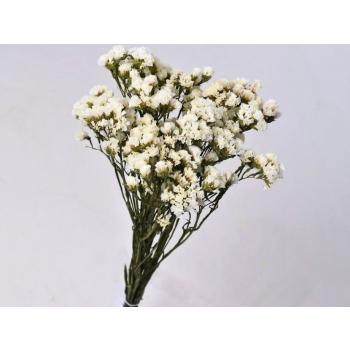 White dried Statice (15 stems)