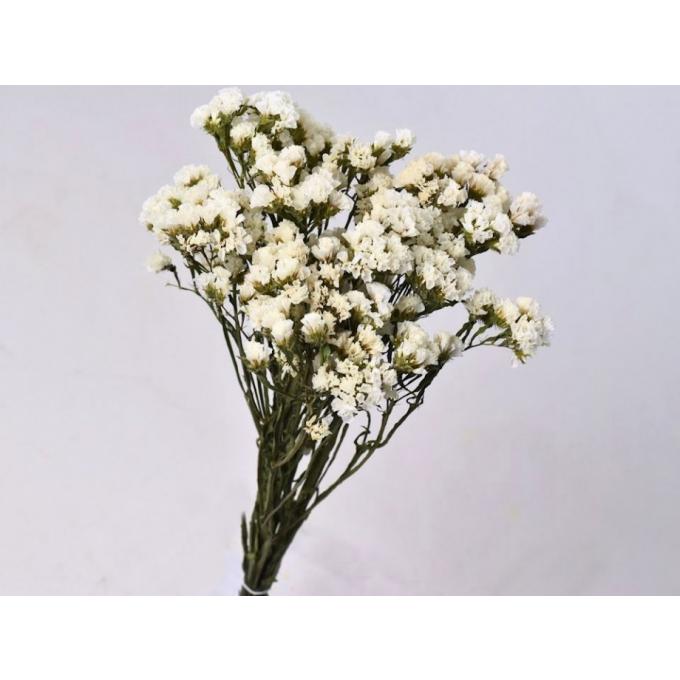 White dried Statice Sinuata