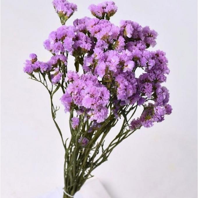 Light Lilac dried Statice