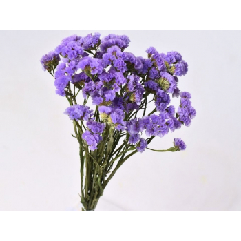 Violet dried Statice