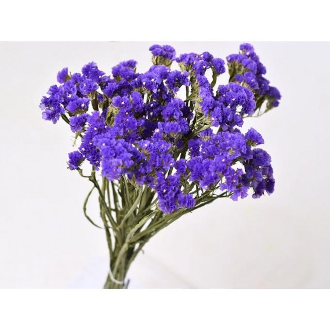 Dark violet dried Statice