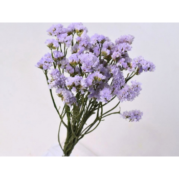 Lavender dried Statice