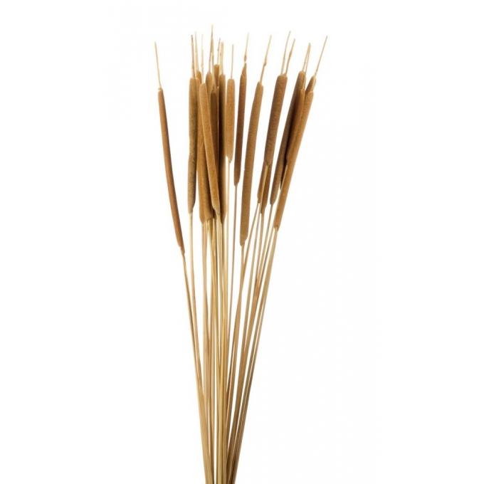 Typha cane