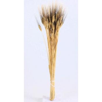 Dried bunch Wheat Black Beard