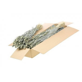 Natural dried foxtail (125 gr) white wash