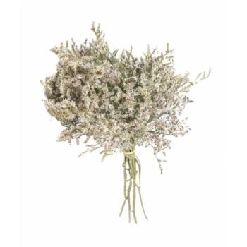 Statice Tatarica white dried