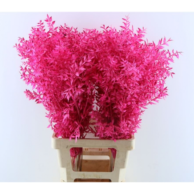 Ruscus bleached painted cerise