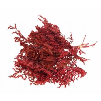 Statice Tatarica red dried