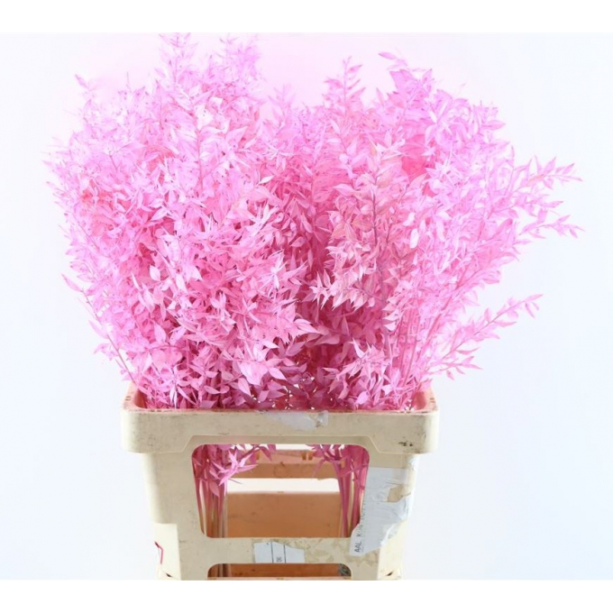 Ruscus bleached painted light pink