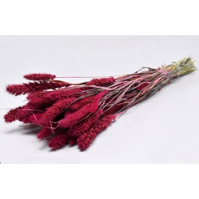Foxtail dried (125 gr) pink