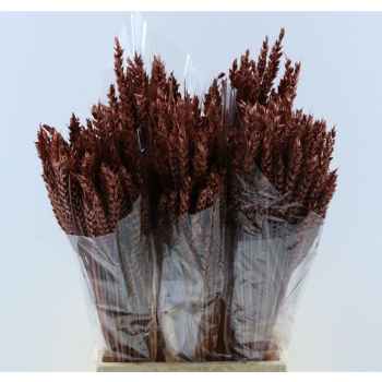 Dry Wheat Bunch with a mahogany color treatment 200 grams