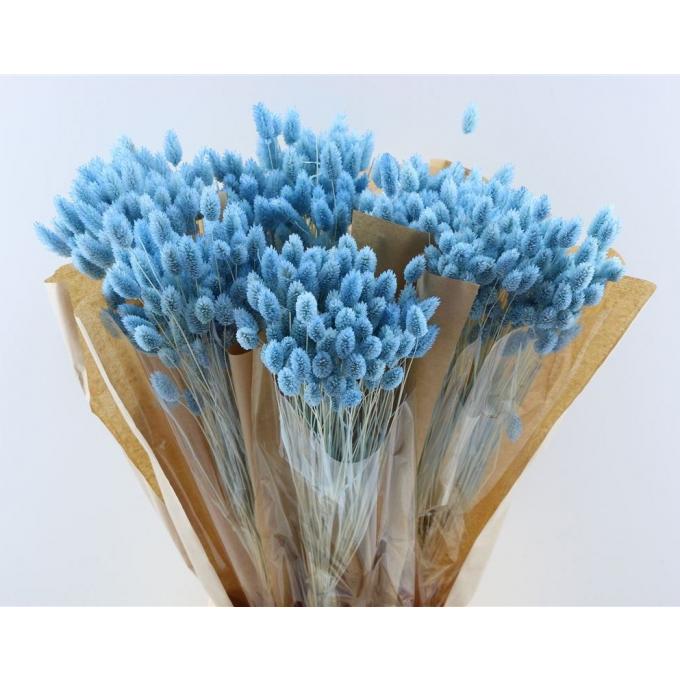 Dried Phalaris bleached pale blue 100 grams