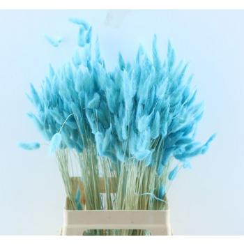 Lagurus Ovatus dried colored pale blue