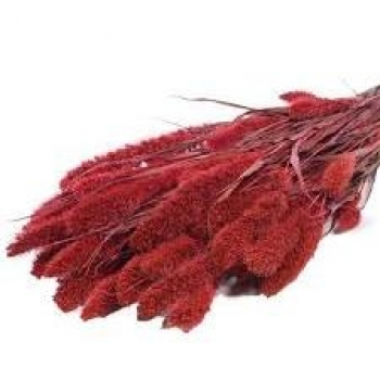 Foxtail dried (125 gr) red