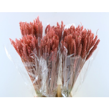 Dry Wheat Bunch with a pink color treatment