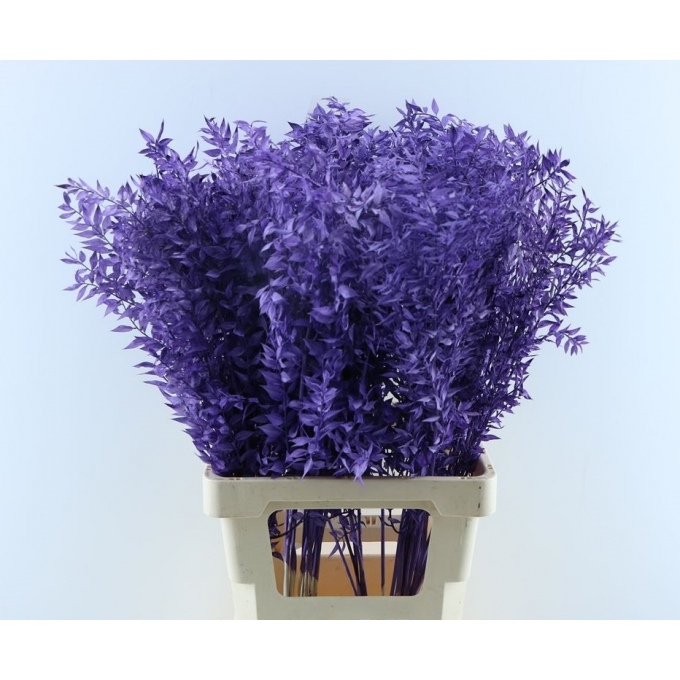 Ruscus bleached painted milka