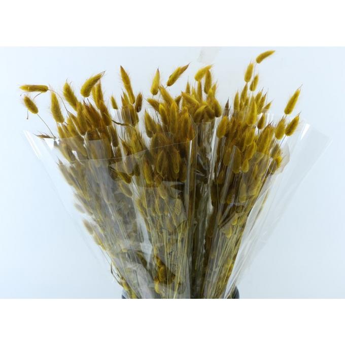 Lagurus Ovatus dried colored yellow brown
