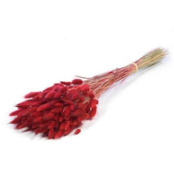 Lagurus Ovatus dried colored red