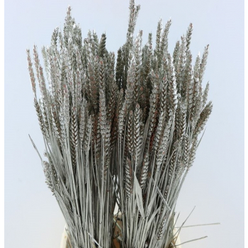 Dried bunch Wheat platinum colored 100 grams