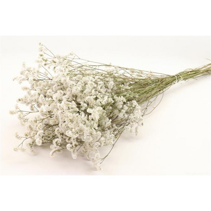 Limonium Diamond white dried