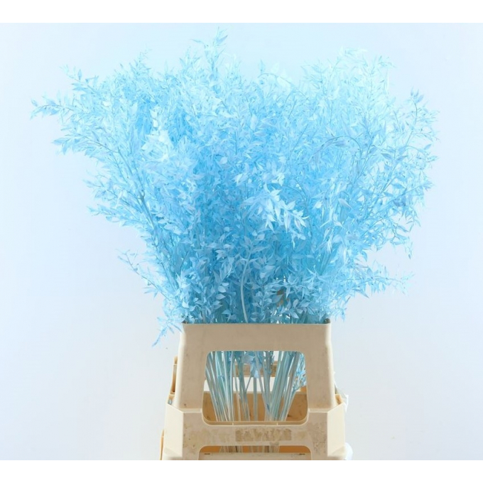Ruscus bleached painted light blue