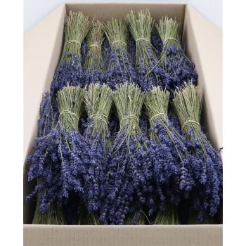 Dried lavender Dark Blue (150 gr bunch)