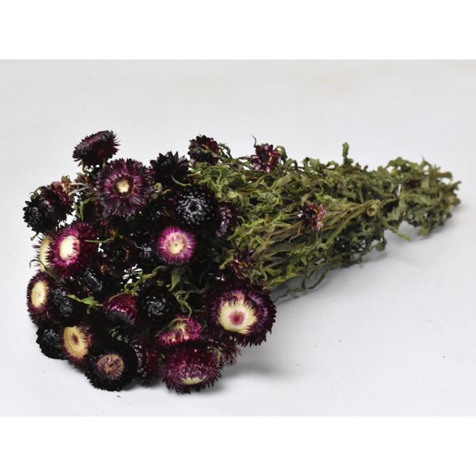 Dried Helichrysum dark purple